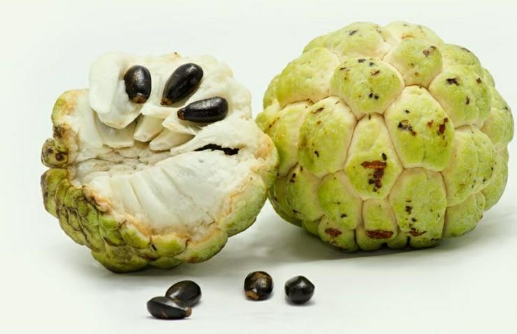 Τα φρούτα της Αφρικής - custard apple