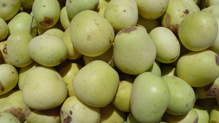 Τα φρούτα της Αφρικής - marula
