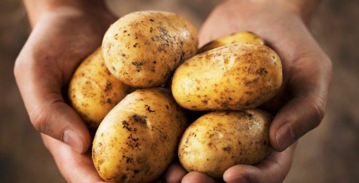 Η πατάτα, που αποτελεί σήμερα την πέμπτη μεγαλύτερη καλλιέργεια τροφής στον κόσμο, γεννήθηκε και καλλιεργήθηκε πρώτη φορά στην οροσειρά των Άνδεων μερικές χιλιάδες χρόνια πίσω.