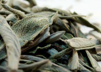 φύλλα φασκομηλιάς