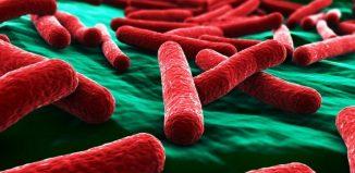 E.coli μικροοργανισμός που βρίσκεται στα τρόφιμα