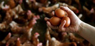 σκάνδαλο μολυσμένα αυγά